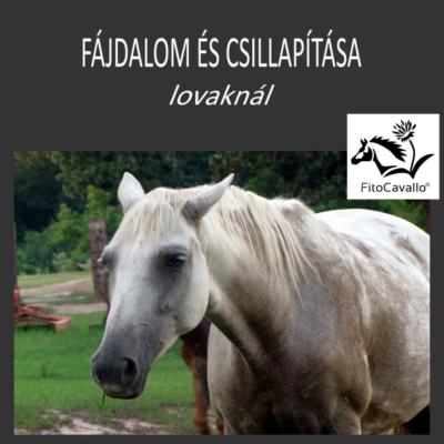 Fájdalom felismerése, megítélése, természetes csillapítása lovaknál LÓHERBA könyv