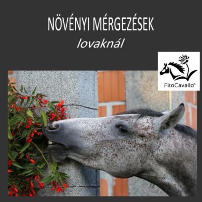 Növényi mérgezések lovaknál - ingyen letölthető LÓHERBA kiadvány